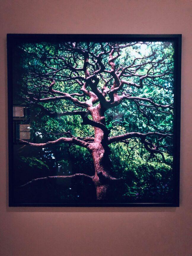 trees exhibition